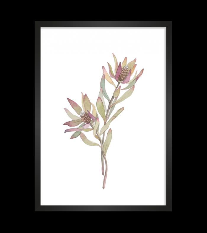 native flowers print art