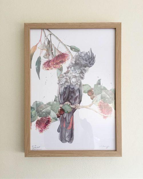 Black cockatoo and eucalyptus flower art print A4 frames