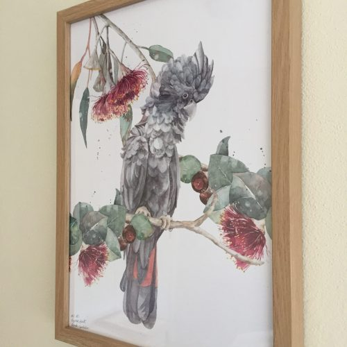 Black cockatoo and eucalyptus flower art print A4 frames